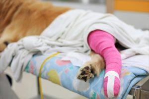 cruciate-ligament-postop