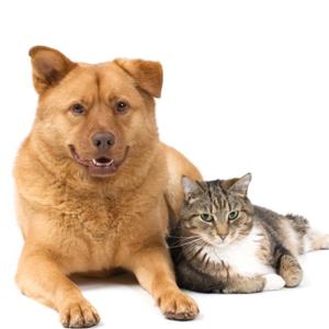 vetcare-aged-pet