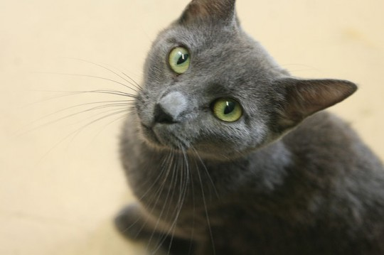 atmore-animal-shelter-010-540x359
